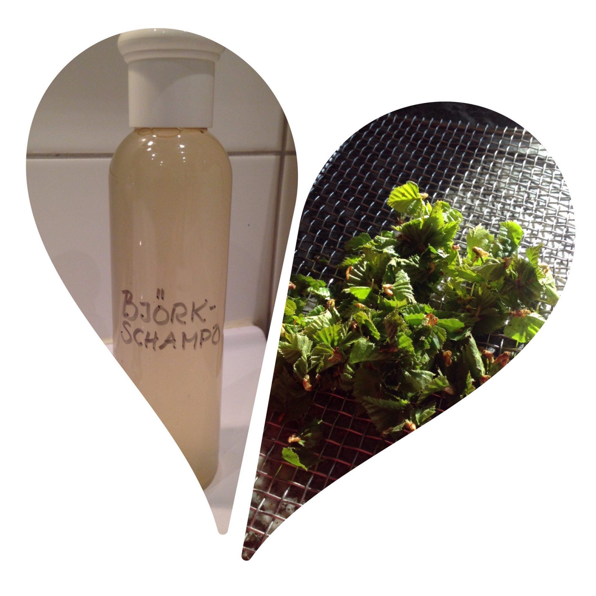 Björkschampo – naturligt, gratis och giftfritt