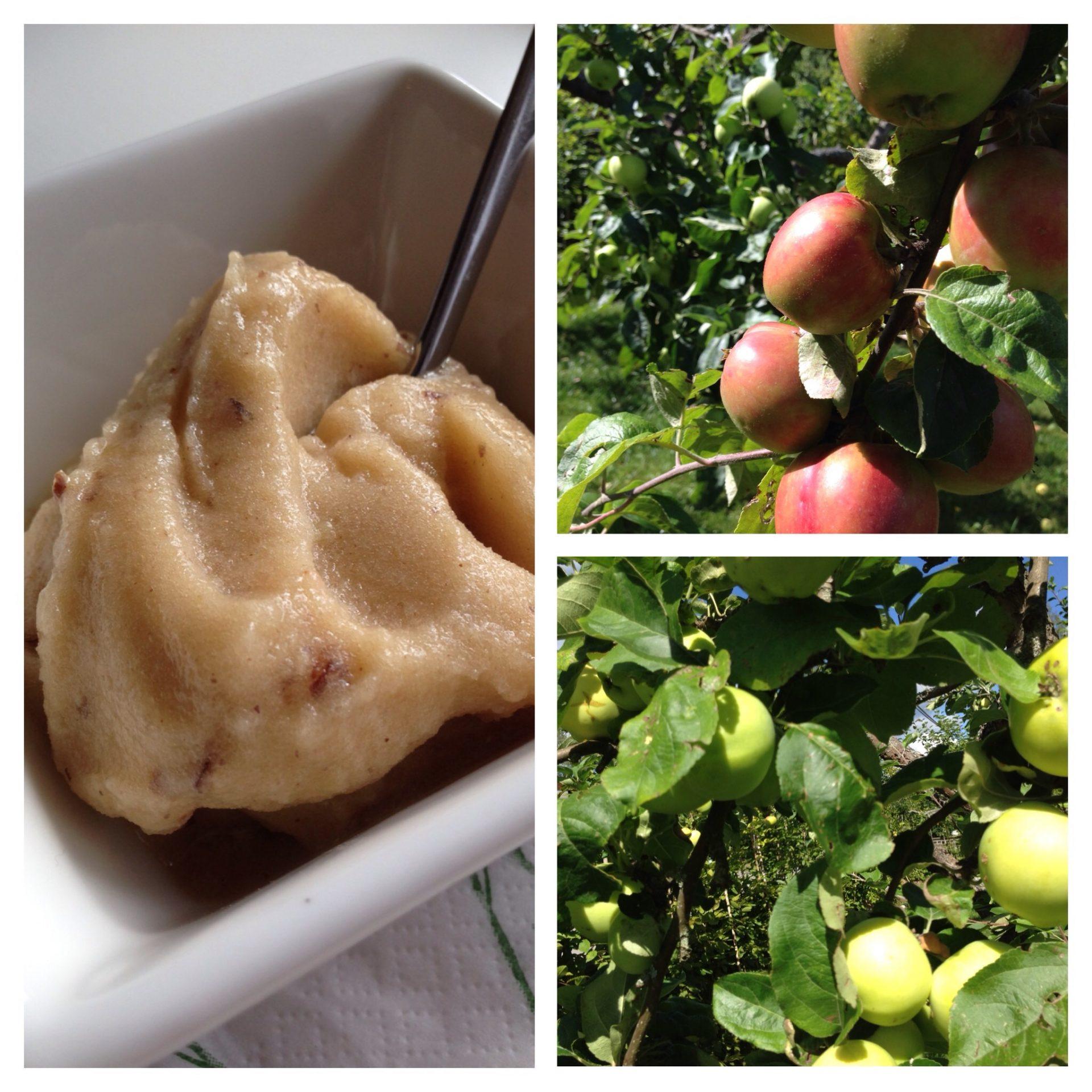 Äppelsorbet – med bara två ingredienser