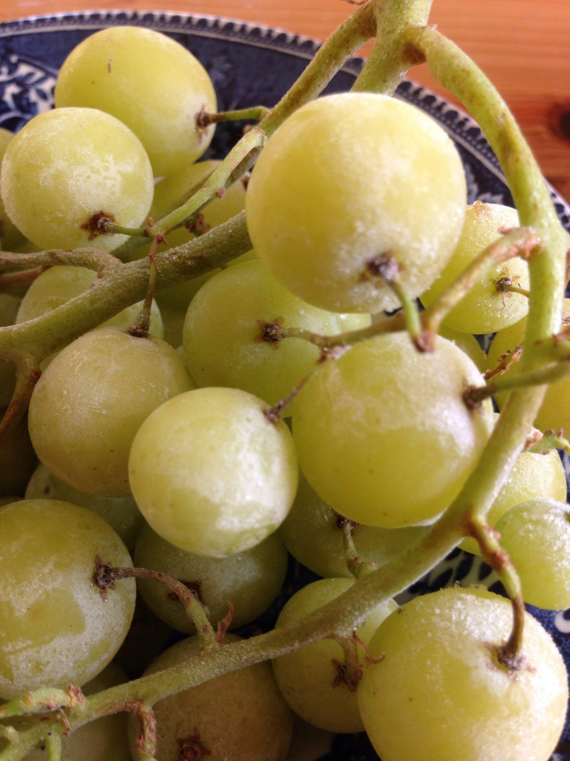 Frysta vindruvor smakar som isglass